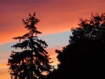 зеленый цвет ветвей никто лето неба riverbank Стоковая Фотография
