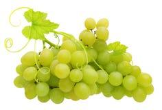 зеленый цвет виноградины изолировал Стоковое Фото