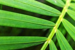 зеленый цвет выходит ладонь Стоковые Фотографии RF