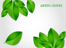 Зеленый цвет выходит вектор предпосылки Стоковая Фотография