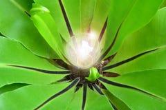 Зеленый цвет выходит вокруг электрической лампочки для энергии и идеи природы Стоковое Изображение RF