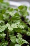 зеленый цвет выходит детеныши Стоковая Фотография RF