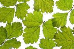 зеленый цвет выходит картина Стоковая Фотография