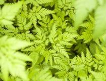 зеленый цвет выходит картина Стоковое Изображение RF