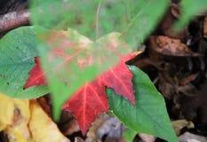 зеленый цвет выходит красный цвет стоковое изображение