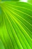 Зеленый цвет выходит крупный план Стоковая Фотография RF