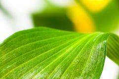 Зеленый цвет выходит крупный план Стоковое Изображение RF