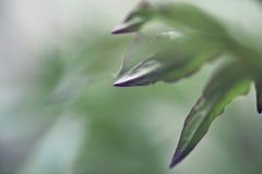 зеленый цвет выходит макрос Стоковое фото RF