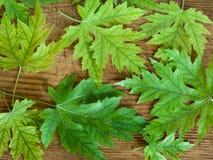 Зеленый цвет выходит на старую предпосылку деревянной доски Стоковые Изображения RF