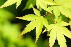 зеленый цвет выходит новым Стоковая Фотография