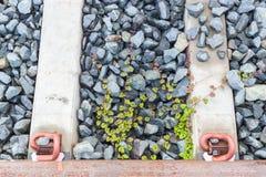 зеленый цвет выходит ползучесть на камни Стоковое фото RF