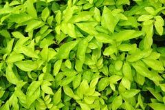 Зеленый цвет выходит предпосылка бумаги стены Стоковые Изображения