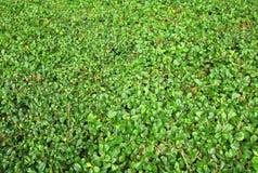 Зеленый цвет выходит предпосылка бумаги стены Стоковые Фотографии RF