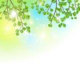 Зеленый цвет выходит предпосылка вектора ветвей дерева бесплатная иллюстрация