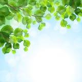 Зеленый цвет выходит предпосылка вектора ветвей дерева иллюстрация вектора