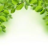 Зеленый цвет выходит предпосылка границы Стоковое Изображение RF