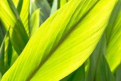 Зеленый цвет выходит предпосылка лист Стоковое Изображение