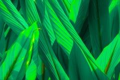 Зеленый цвет выходит предпосылка лист Стоковые Фото