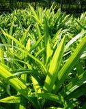Зеленый цвет выходит предпосылка текстуры Стоковые Фото