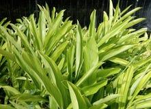 Зеленый цвет выходит предпосылка текстуры Стоковое фото RF