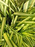 Зеленый цвет выходит предпосылка текстуры Стоковая Фотография RF