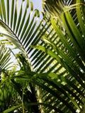 Зеленый цвет выходит предпосылка текстуры Стоковое Изображение RF