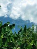 Зеленый цвет выходит предпосылка текстуры Стоковые Фотографии RF