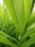 Зеленый цвет выходит предпосылка текстуры Стоковое Изображение