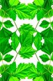 Зеленый цвет выходит предпосылка Стоковое фото RF