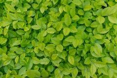 Зеленый цвет выходит предпосылка Стоковые Изображения RF