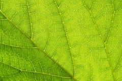 зеленый цвет выходит просвечивающим стоковое изображение rf