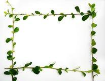 Зеленый цвет выходит рамка граници Стоковая Фотография RF