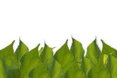 Зеленый цвет выходит рамка предпосылки, белизна, космос для содержания текста Стоковое Фото