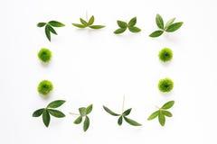 Зеленый цвет выходит рамка Стоковые Фотографии RF