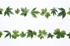 Зеленый цвет выходит рамка Стоковая Фотография