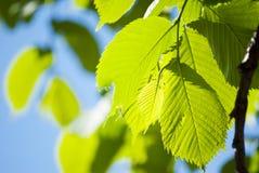 зеленый цвет выходит солнце Стоковая Фотография