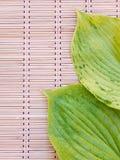 Зеленый цвет выходит с венами на бамбуковую циновку Стоковые Изображения