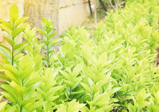 Зеленый цвет выходит текстура Стоковая Фотография