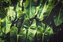 Зеленый цвет выходит тропическая предпосылка стоковая фотография
