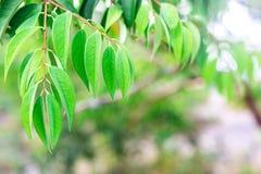зеленый цвет выходит тропической против предпосылки голубые облака field wispy неба природы зеленого цвета травы белое Селективны Стоковая Фотография RF