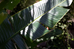 зеленый цвет выходит тропической стоковое изображение