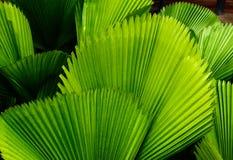 зеленый цвет выходит тропической Стоковое Фото