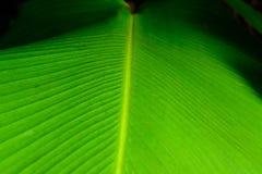 зеленый цвет выходит тропической Стоковое фото RF
