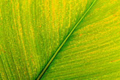 зеленый цвет выходит тропической Стоковые Фото