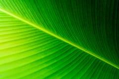 зеленый цвет выходит тропической Стоковые Изображения