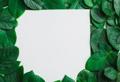 зеленый цвет граници выходит груша Рамка лист дерева изолированная на белизне Стоковые Изображения