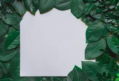 зеленый цвет граници выходит груша Рамка лист дерева изолированная на белизне Стоковая Фотография RF