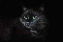 зеленый цвет глаз черного кота Стоковые Фото