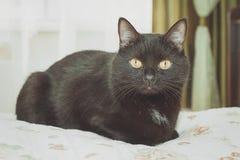 зеленый цвет глаз черного кота Стоковые Изображения