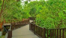 Зеленый цвет дерева предпосылки, древесина Стоковая Фотография RF